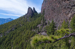 Paisagem bonita do pinheiro no La Palma, Ilhas Canárias, Espanha Fotografia de Stock