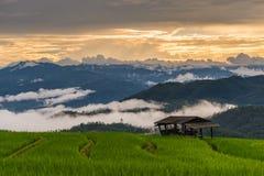 Paisagem bonita do terraço com névoa Imagem de Stock Royalty Free