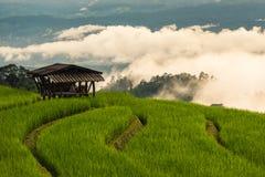 Paisagem bonita do terraço com névoa no fundo Foto de Stock