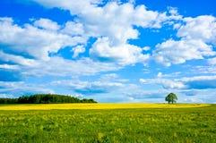 Paisagem bonita do verão Imagens de Stock
