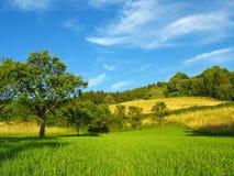 Paisagem bonita do verão Fotografia de Stock