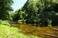 Paisagem bonita do verão com rio, floresta, sol e os céus azuis Fundo natural Fotos de Stock