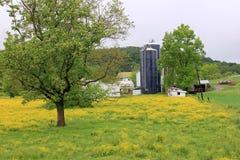 Paisagem bonita dos botões de ouro e das explorações agrícolas Fotos de Stock Royalty Free