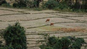 Paisagem bonita em Laos filme