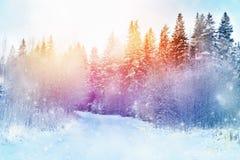 Paisagem bonita A estrada na floresta do inverno, voo da neve Imagens de Stock