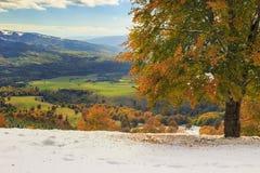 Paisagem bonita na floresta, Carpathians do outono, Transylvani Imagem de Stock