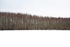 Paisagem bonita no inverno com árvores Imagens de Stock