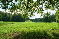Paisagem bonita no parque de Pavlovsk St Petersburg Foto de Stock