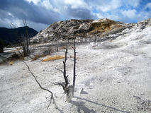 Paisagem branca de Mammoth Hot Springs no por do sol Fotos de Stock Royalty Free