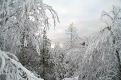 Paisagem branca feericamente da neve Foto de Stock Royalty Free