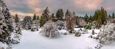 Paisagem brilhante, colorida do inverno da noite Foto de Stock Royalty Free