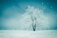 Paisagem cénico do inverno imagem de stock royalty free