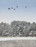 Paisagem cénico do inverno Imagens de Stock Royalty Free