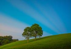 Paisagem cênico da árvore dois grande com raios de sol foto de stock