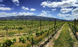 Paisagem cênico da exploração agrícola do vinhedo em Cromwell, Nova Zelândia fotografia de stock