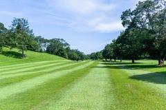 Paisagem cênico das árvores do fairway do campo de golfe foto de stock