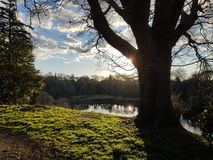 Paisagem calma de uma árvore grande contra o fundo do por do sol fotos de stock royalty free