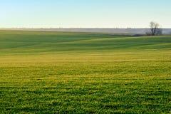 Paisagem Campo verde no sol Foto de Stock