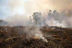 Paisagem carbonizada de um incêndio prescrito Fotos de Stock