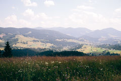 Paisagem Carpathian O limite entre o campo e a floresta, vista de cima de Imagens de Stock