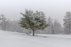 Paisagem coberto de neve com árvore Imagens de Stock Royalty Free
