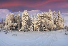 Paisagem colorida do inverno nas montanhas Imagem de Stock Royalty Free
