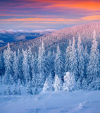 Paisagem colorida do inverno nas montanhas Imagens de Stock