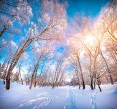 Paisagem colorida do inverno no parque da cidade Fotografia de Stock
