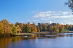 Paisagem colorida do outono com folhas de queda Dia de outubro no parque de Pavlovsk, StPetersburg, Rússia Foto de Stock
