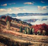 Paisagem colorida do outono na aldeia da montanha Manhã nevoenta fotografia de stock royalty free