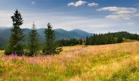 Paisagem colorida do verão Foto de Stock Royalty Free