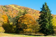 Paisagem colorida durante fim de outubro fotos de stock royalty free