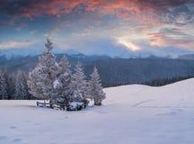 Paisagem colorida no nascer do sol do inverno na floresta da montanha Imagem de Stock