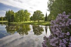 Paisagem com água e o lilac Imagem de Stock