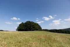 Paisagem com área da árvore Imagem de Stock Royalty Free
