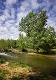Paisagem com árvore Imagem de Stock Royalty Free