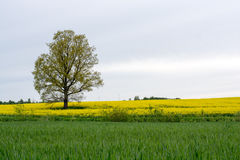 Paisagem com árvore Fotos de Stock