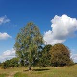 Paisagem com a árvore de vidoeiro no fim do verão imagem de stock