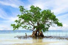 Árvore dos manguezais. Ilha de Siquijor, Filipinas fotografia de stock royalty free