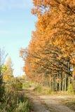 paisagem com árvore e estrada de maçã Imagem de Stock Royalty Free