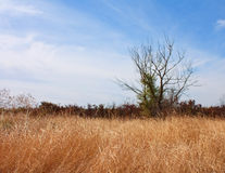 Paisagem com a árvore e grama secas sós Imagem de Stock Royalty Free