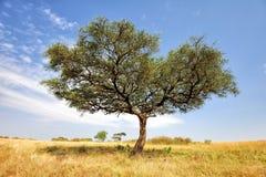 Paisagem com a árvore em África imagens de stock