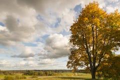 Paisagem com a árvore em cores do outono Fotos de Stock