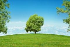 Paisagem com árvore no centro Fotos de Stock Royalty Free