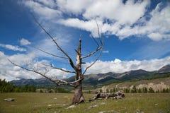 Paisagem com a árvore seca no fundo do céu Foto de Stock Royalty Free