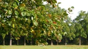 Paisagem com árvores Fotografia de Stock