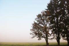 Paisagem com árvores fotos de stock royalty free