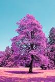 Paisagem com árvores Foto de Stock Royalty Free