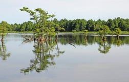 Paisagem com árvores de cipreste fotos de stock royalty free