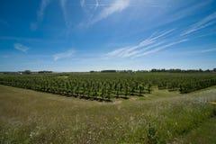 Paisagem com árvores de fruta Foto de Stock Royalty Free